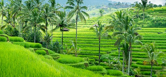 Balis (11n.) - atgaiva sieloms čiulbančių džiunglių ir aksominio dangaus glėbyje