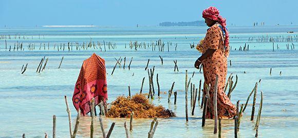 Zanzibaras (7 naktys) - Sea View Lodge 4* viešbutyje su pusryčiais ir vakarienėmis