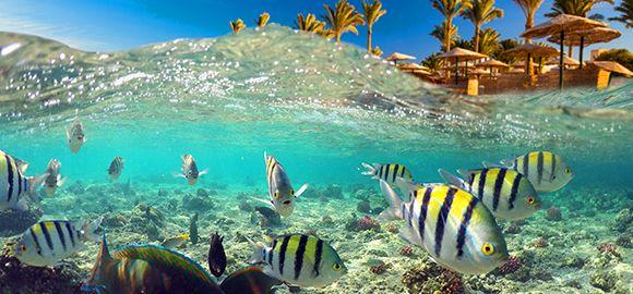 Egiptas (Šarm el Šeichas) - panirkite į nebylų ir spalvingą povandeninį pasaulį