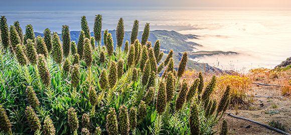 Madeira - šilkinė žiedlapių jūra, vingiuojančios levados ir Atlanto vandenyno šėlsmas