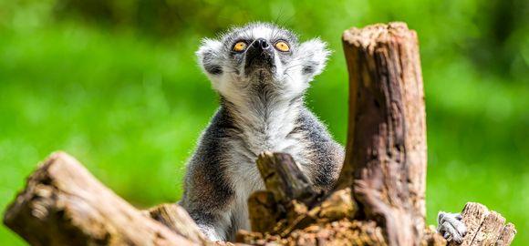Madagaskaras - margas, unikalus, didingas ir užburiantis kitoks pasaulis