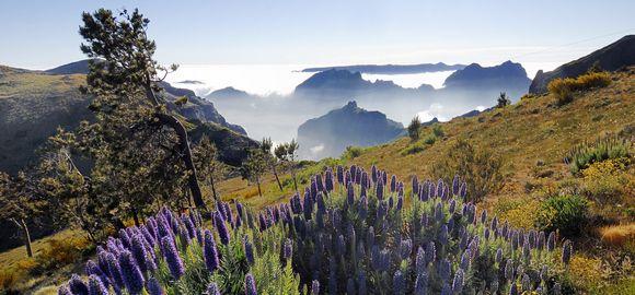 Madeira (7 naktys) - Rocamar & Royal Orchid 4* viešbutyje su pusryčiais ir vakarienėmis