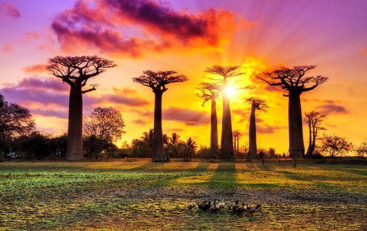 Madagaskaras (7 naktys) - gyvenimas atrodo gražesnis, kai guli po palme lemūrų draugijoje
