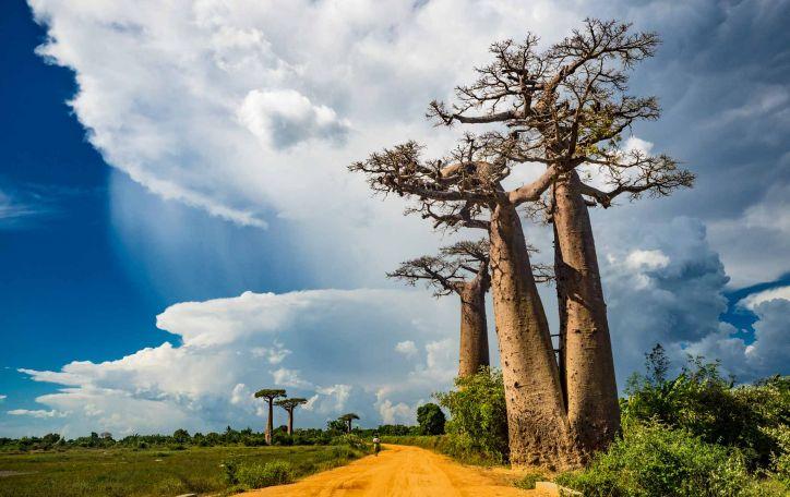 Madagaskaras - didingas pasimatymas su tikrąja egzotika