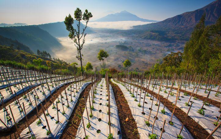 Balis (9n.) - tobulos atostogos žaliame nepriekaištingos gamtos glėbyje