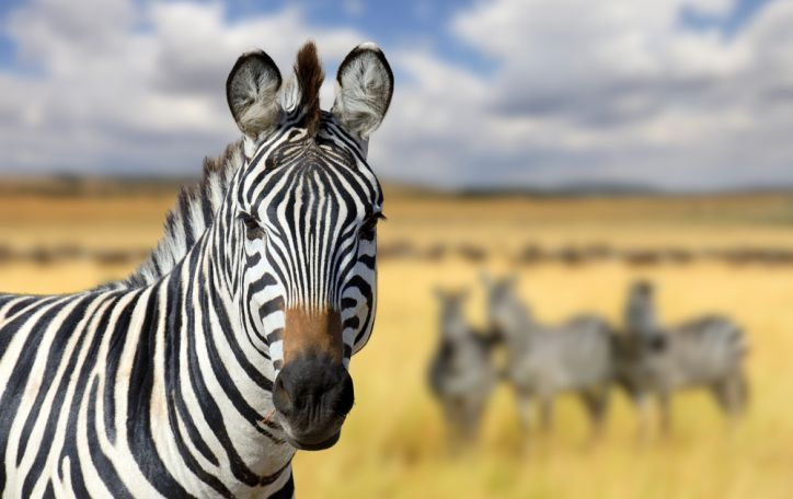 Kenija - vietoje kelionės į zoologijos sodą, prisilietimas tikros laukinės gamtos