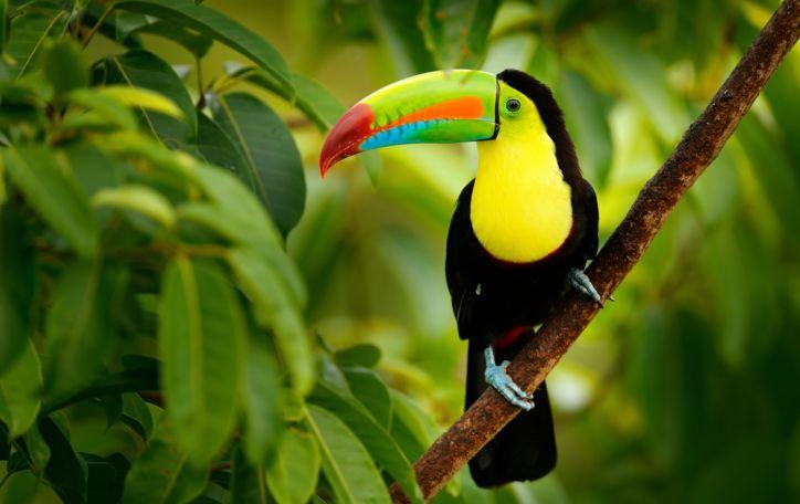 Kosta Rika - ryškios atostogos ten, kur tamsioms spalvoms nėra vietos