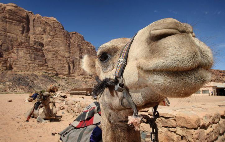 Egiptas - vieta, kur šlovinga praeitis sutinka niekur  neskubančią dabartį