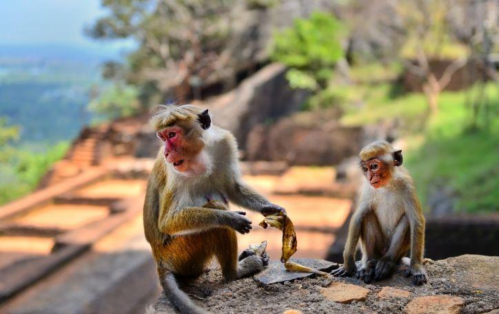 Šri Lanka (11n.) - viliojanti drambliais ir šnaranti arbatos lapeliais