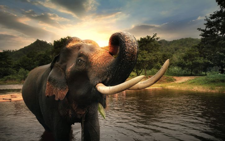 Tailandas (Žiema 2020/21) - džiunglių gyvybė, budistų ramybė ir šventyklų didybė