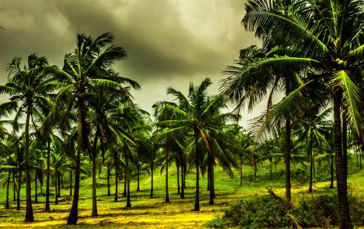 Naujieji metai Indijoje (Goa) - nauji kvapai ir skoniai Jūsų uoslei ir Jūsų sielai