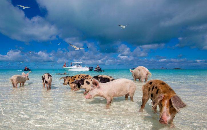 Bahamų salos - pasaulis pro rožinius akinius: prabangios ir nerūpestingos atostogos