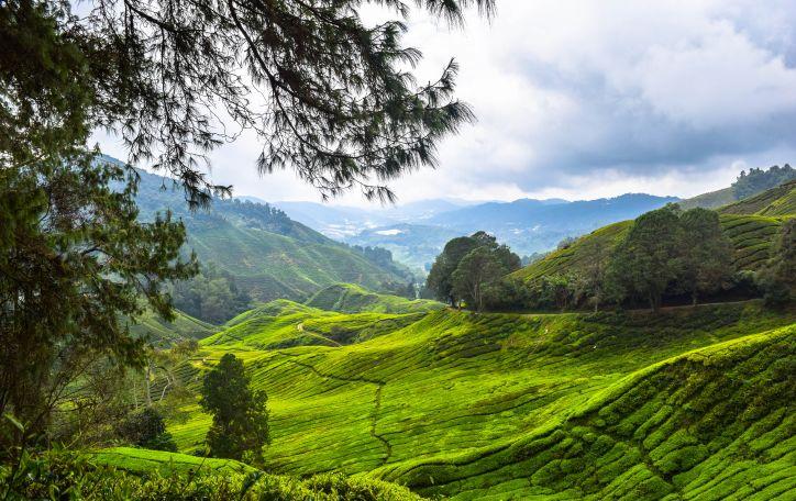 Malaizija (9n.) - spalvingo gyvenimo ir kvapą gniaužiančios gamtos fejerija