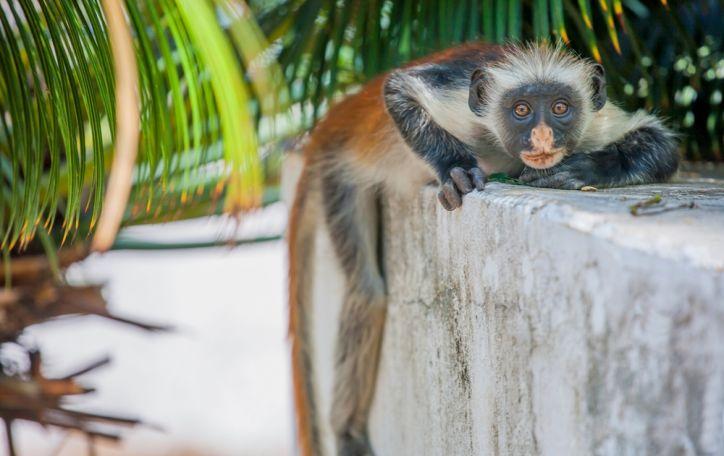 Zanzibaras (14n.) - auksinių spindulių nutviekstos idiliškos atostogos